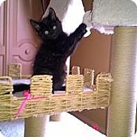 Adopt A Pet :: Boka - East Hanover, NJ