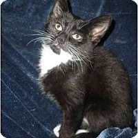 Adopt A Pet :: Baby - Loveland, CO