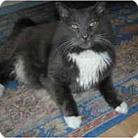 Adopt A Pet :: Isaac - Arlington, VA