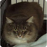 Adopt A Pet :: Mylo - Westfield, MA