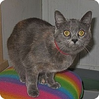 Adopt A Pet :: Constance - Shelton, WA