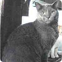 Adopt A Pet :: Smokey - Milford, OH