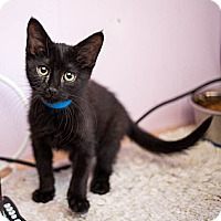 Adopt A Pet :: Prince - Shelton, WA