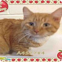 Adopt A Pet :: Herbert (Foster Home Needed!) - Arlington, VA