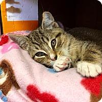 Adopt A Pet :: Monroe - Island Park, NY
