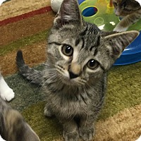 Adopt A Pet :: Orion - Turnersville, NJ