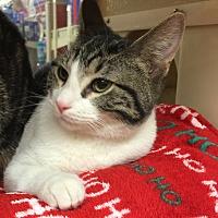 Adopt A Pet :: Bryce - Centerton, AR