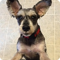 Adopt A Pet :: HARLEY (SRC#1573) IN NC - Lenoir, NC