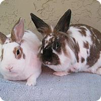 Adopt A Pet :: Robbie & Ruthie - Bonita, CA