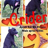 Adopt A Pet :: Crider - Mission, KS
