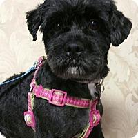 Adopt A Pet :: Bentley Ranger - Urbana, OH