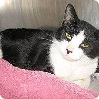 Adopt A Pet :: Claudia - Port Jervis, NY