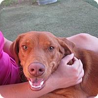 Adopt A Pet :: Red - Austin, TX