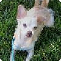 Adopt A Pet :: Sonny - Lodi, CA