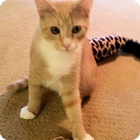 Adopt A Pet :: Cassidy - Morganton, NC