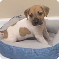 Adopt A Pet :: Helene - Lebanon, ME