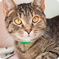 Adopt A Pet :: Starfire - Brimfield, MA