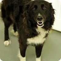 Adopt A Pet :: SUGARPLUM - San Pedro, CA