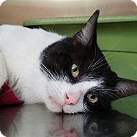 Adopt A Pet :: Douglas Fur - Elyria, OH
