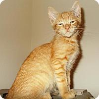 Adopt A Pet :: jake - Centreville, VA