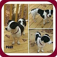 Adopt A Pet :: PEARL - Malvern, AR