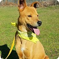Adopt A Pet :: Dingo - Washington, GA