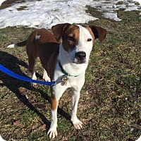 Adopt A Pet :: LOLA - Traverse City, MI