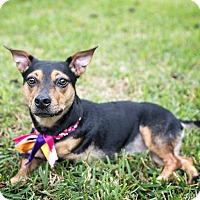 Adopt A Pet :: Millie - Vancouver, BC