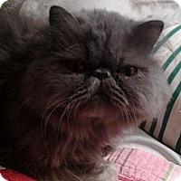 Adopt A Pet :: Winston - Columbus, OH