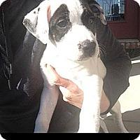 Adopt A Pet :: Matthew - Maryville, IL