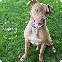 Adopt A Pet :: Rusty - Scottsdale, AZ