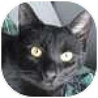 Adopt A Pet :: Natalie AKA Tuna Mart - Vancouver, BC