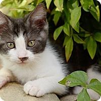Adopt A Pet :: Leonides - North Highlands, CA
