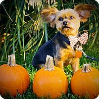 Adopt A Pet :: Rufus - Princeton, KY