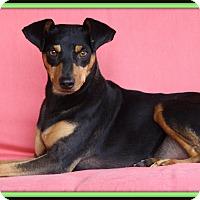 Adopt A Pet :: Lurch - Edmonton, AB