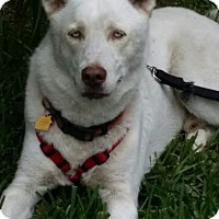 Adopt A Pet :: Dakota - Homestead, FL