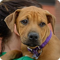 Adopt A Pet :: Amorae-Pending! - Detroit, MI