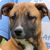 Adopt A Pet :: Mona Lisa - Glastonbury, CT