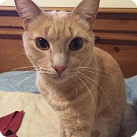 Adopt A Pet :: .Alfredo - Ellicott City, MD