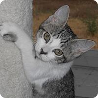 Adopt A Pet :: Lorina - North Highlands, CA