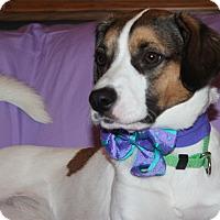 Adopt A Pet :: Ruby Tuesday - Trenton, NJ