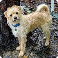 Adopt A Pet :: Scruffy - Richmond, VA