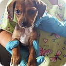 Adopt A Pet :: Bobbin