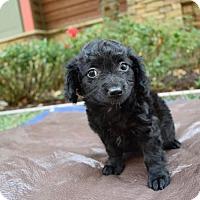 Adopt A Pet :: Parker - Sacramento, CA