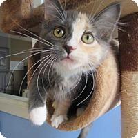 Adopt A Pet :: Belle - Northfield, MN