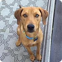 Adopt A Pet :: Sarah - Doylestown, PA