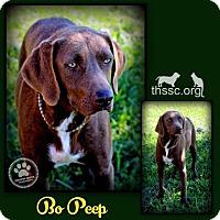 Adopt A Pet :: Bo Peep - Sullivan, IN
