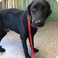 Adopt A Pet :: Jett - Yorktown, VA