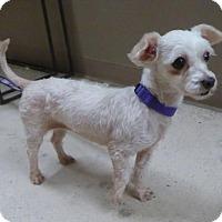 Adopt A Pet :: Patti BB - Seattle, WA