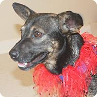 Adopt A Pet :: Morgan - Cuero, TX